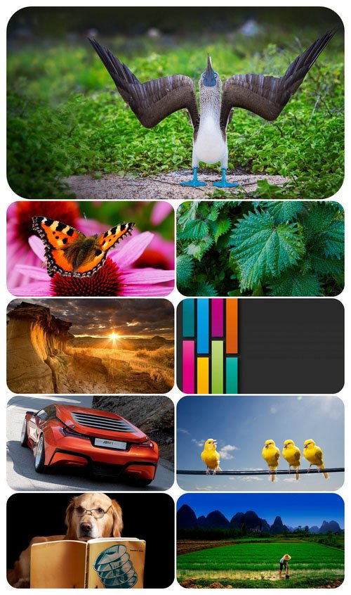 Beautiful Mixed Wallpapers Pack 411