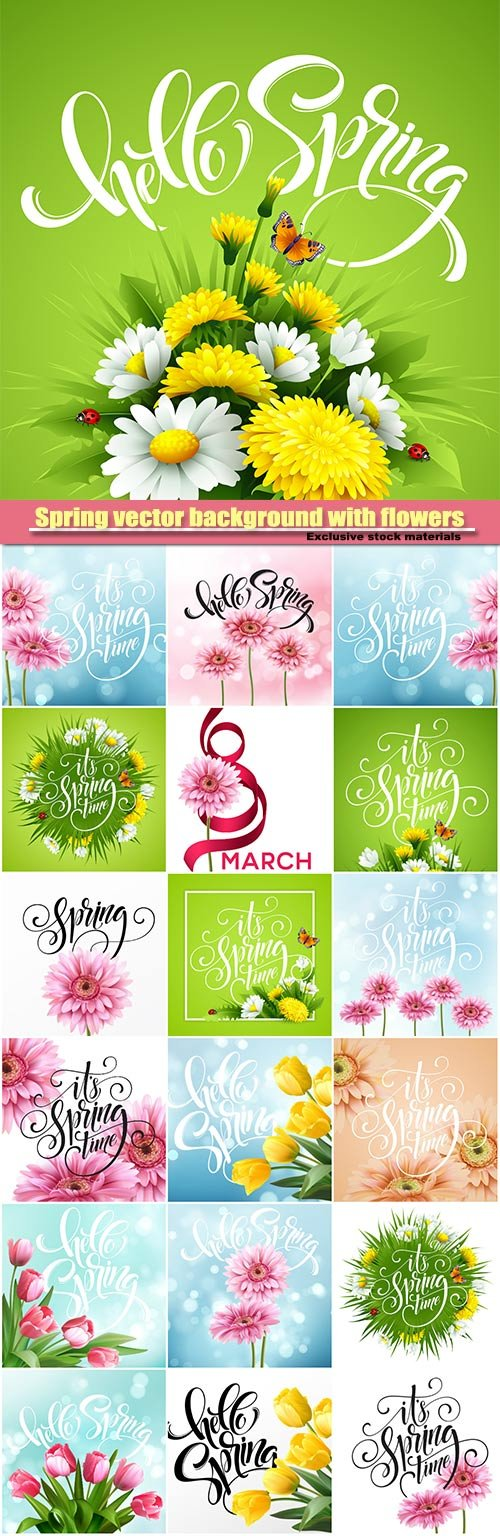 Spring vector background with flowers, tulip flower and gerbera