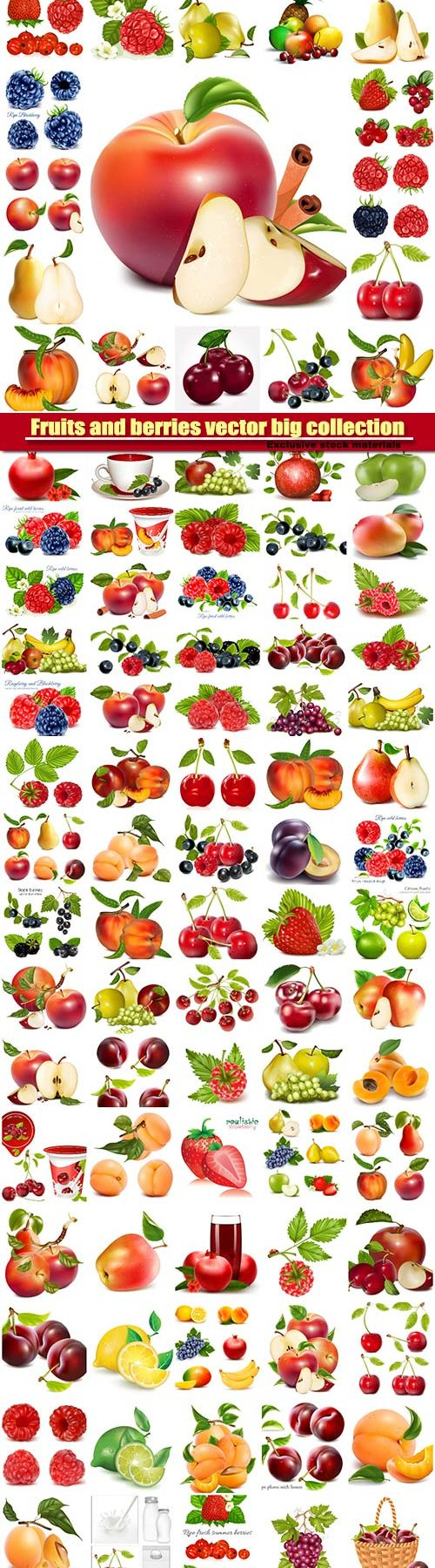 Fruits and berries vector big collection