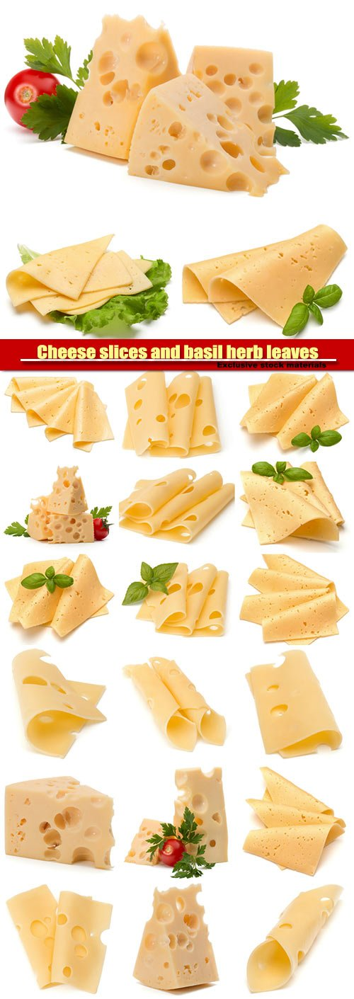Cheese slices and basil herb leaves isolated on white background