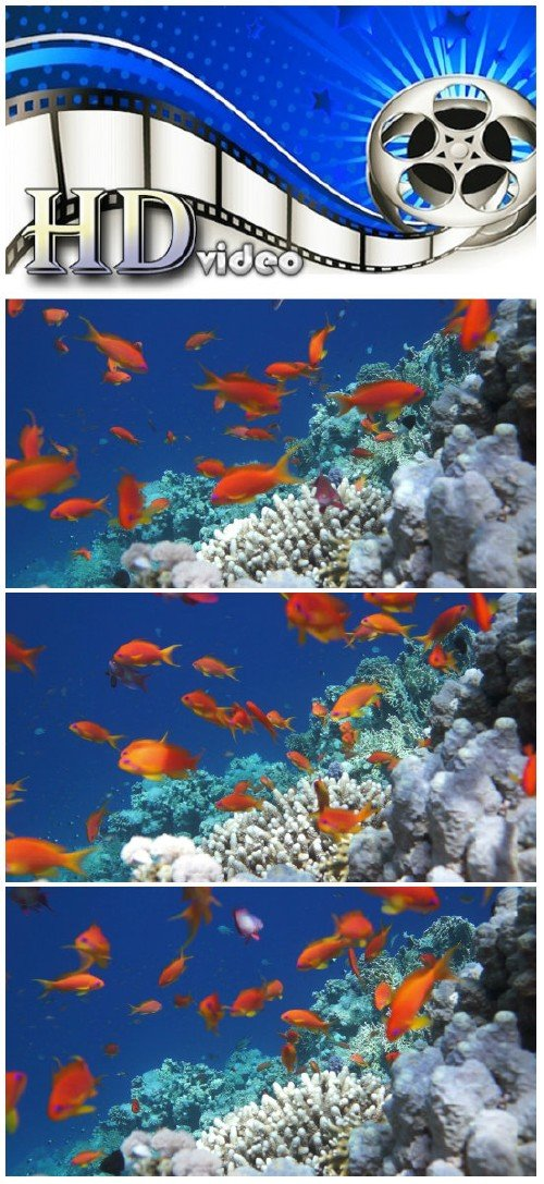Video footage Coral and fish in the Red Sea