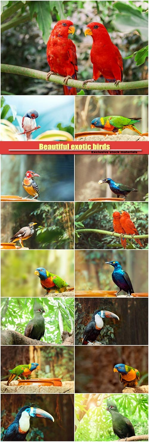 Beautiful exotic birds