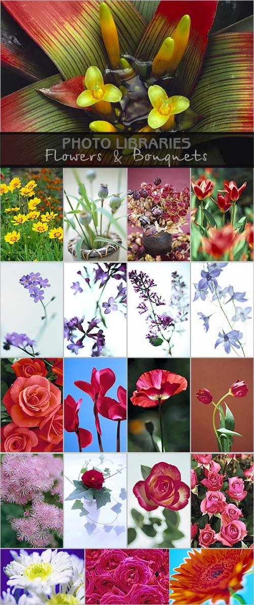 Photo Libraries - Flowers & Bouquets