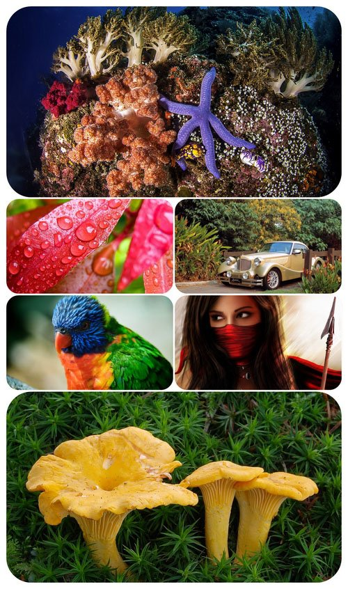 Beautiful Mixed Wallpapers Pack 524