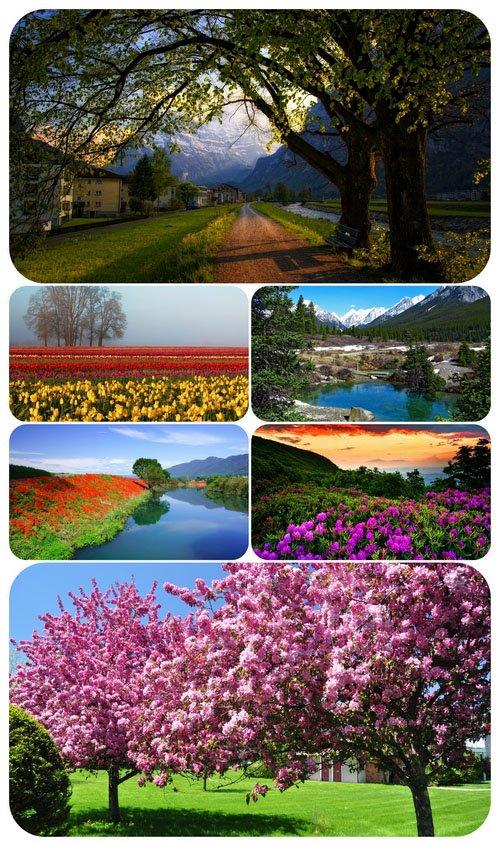 Wallpaper Seasons - Spring