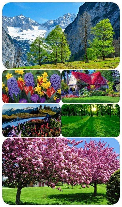Wallpaper Seasons - Spring 2