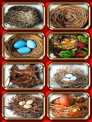Png отличного качества - Гнезда