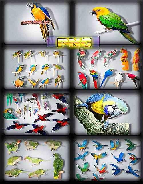Новые клипарты - Разноцветные попугаи