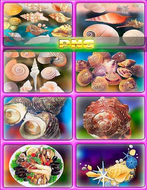 Коллекция клипартов - Ракушки и жемчуг