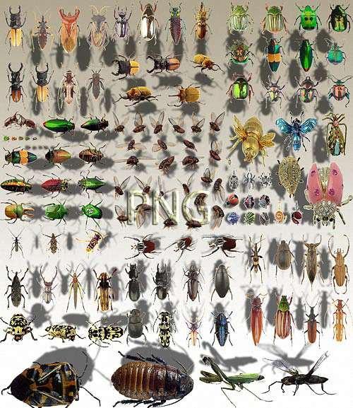 Png Клипарты - Разные букашки
