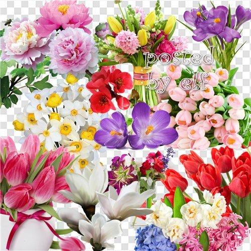 Цветы чисты, красивы и невинны - PNG клипарт