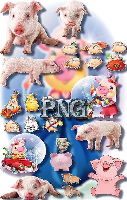 Png Клипарты - Свиньи