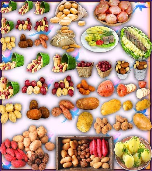 Клипарты на прозрачном фоне - Вкусный картофель