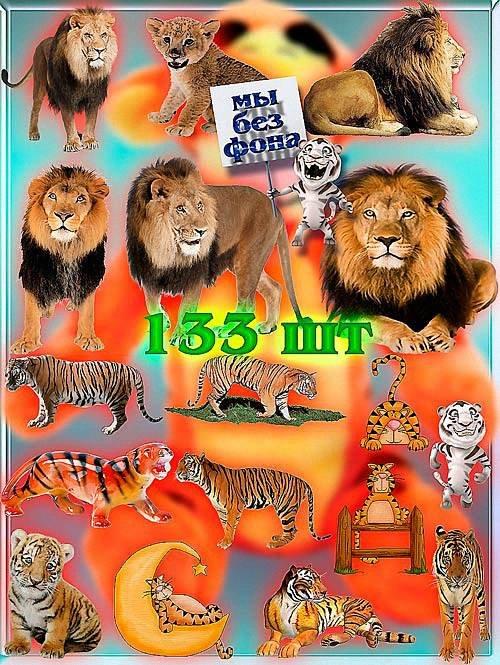 Коллекция Png клип-артов - Львы и тигры