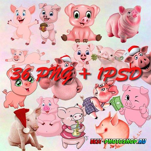 Растровый клипарт - Свинки на прозрачном фоне
