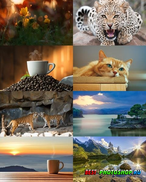 Wallpapers Mix №834