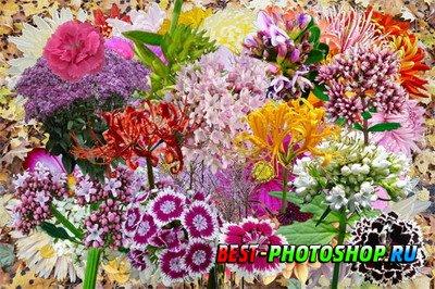Клипарт Полевые и садовые цветы - японские символы осени