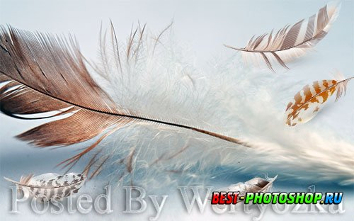 3D psd models fresh modern minimalist flowing feather tv background wall