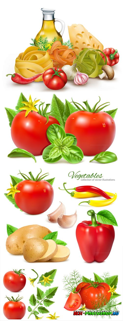 Vegetables in vector, olive oil, cheese and pasta