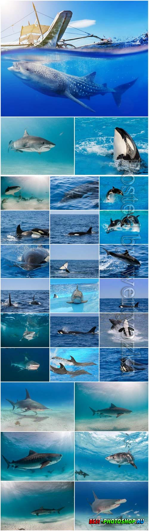 Dolphins, whales and sharks stock photo