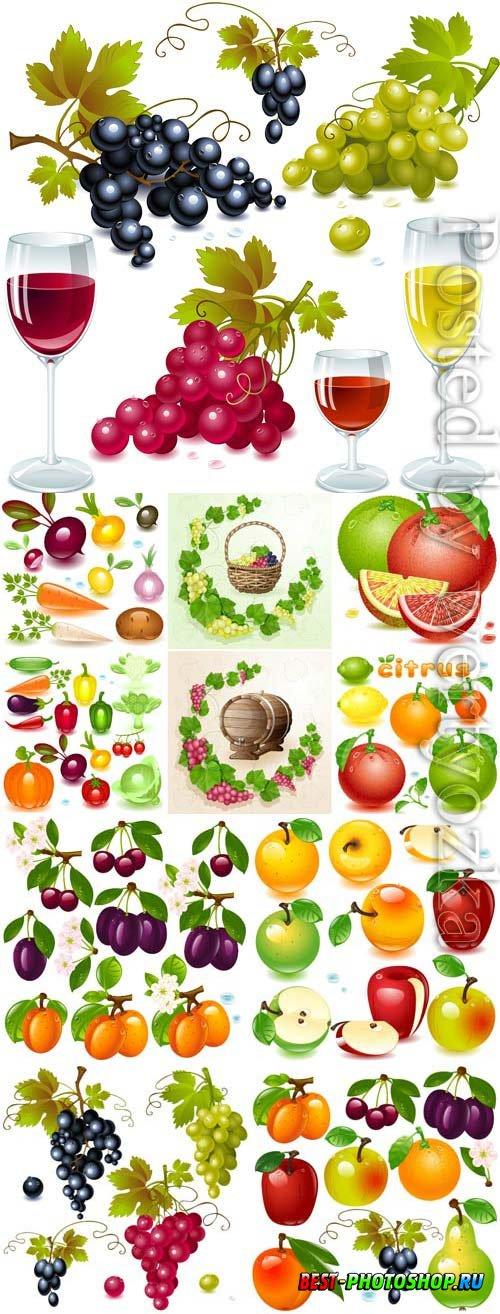 Fruit berries and grape wine in vector
