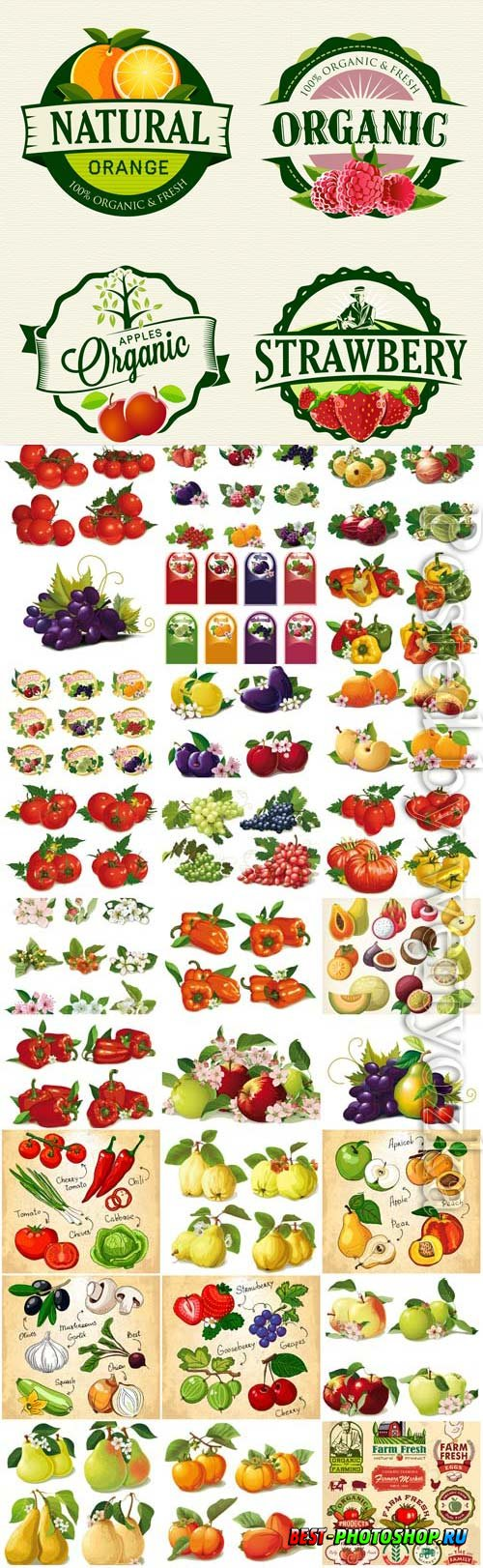 Fresh vegetables and fruits in vector