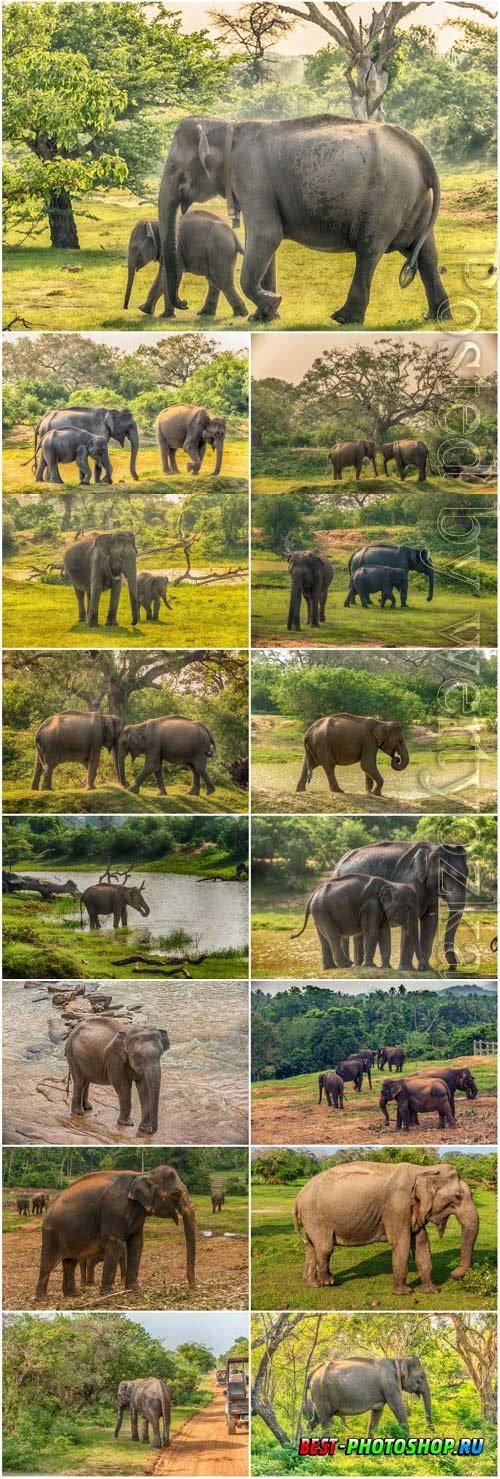 Elephants and little elephants in nature stock photo